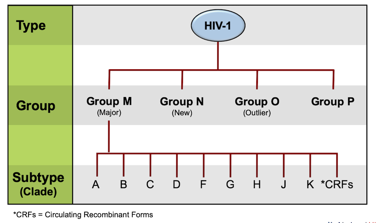 "Strains of HIV-1 can be classified into four groups: the ""major"" group M, the ""outlier"" group O, and two additional groups, N and P. The M group comprises at least 9 distinct HIV subtypes.<div>Source: Taylor BS, Sobieszczyk ME, McCutchan FE, Hammer SM. The challenge of HIV-1 subtype diversity. N Engl J Med. 2008;358:1590-602.</div>"