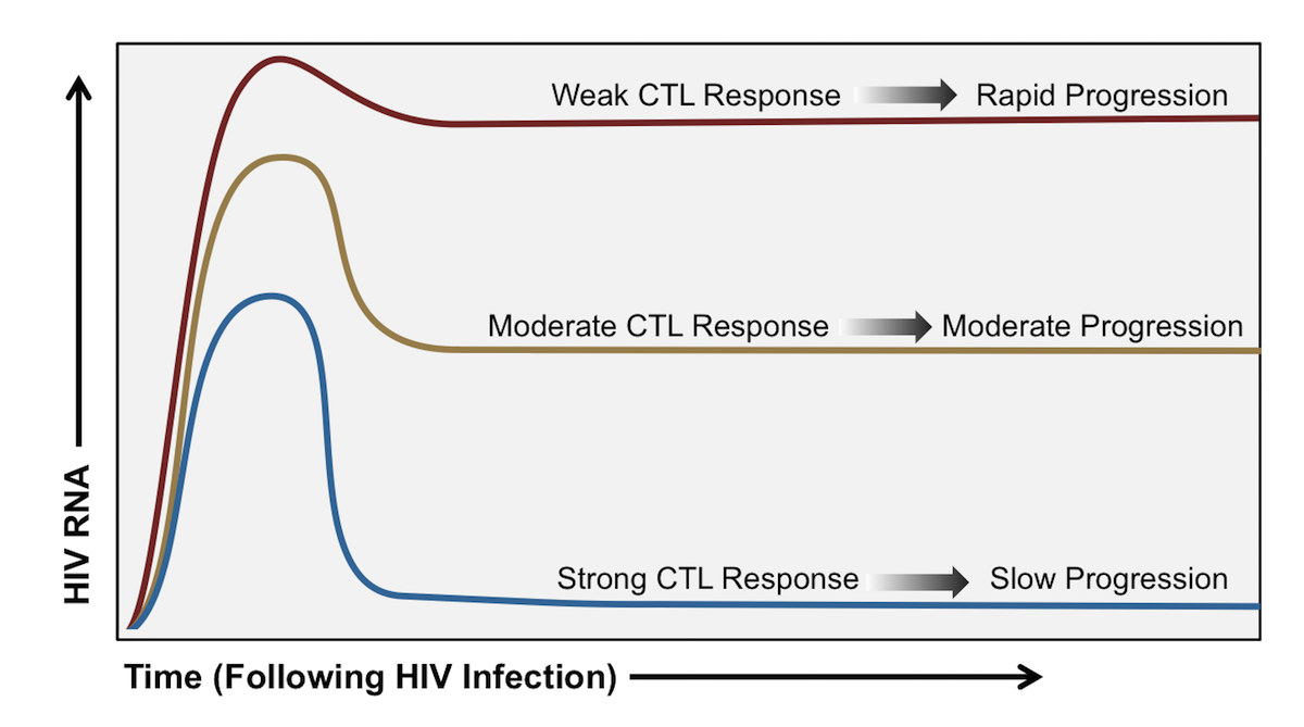 Symptoms of early hiv infection also called primary hiv infection or - Cytotoxic T Lymphocyte Response Following Acute Hiv Infection