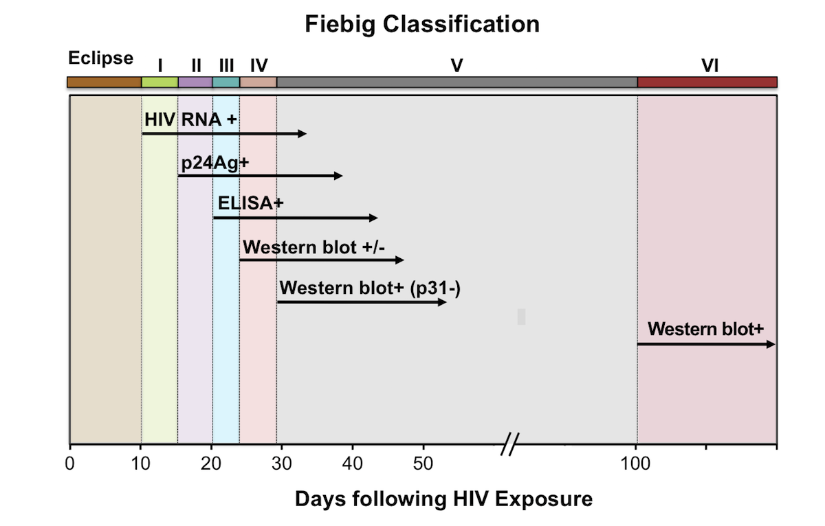 <div>Source: Fiebig EW, Wright DJ, Rawal BD, et al. Dynamics of HIV viremia and antibody seroconversion in plasma donors: implications for diagnosis and staging of primary HIV infection. AIDS. 2003;17:1871-9.</div>