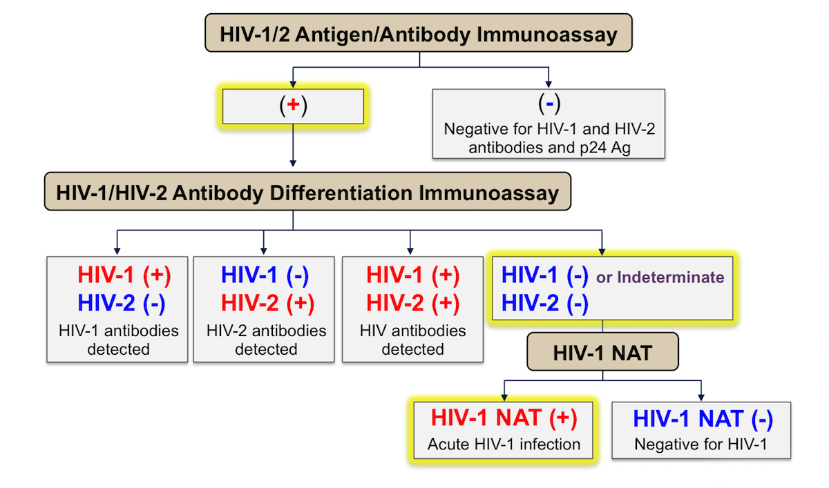 This graphic shows the HIV testing algorithm as recommended by the Centers for Disease Control and Prevention and Association of Public Health Laboratories. The rectangles highlighted with yellow border indicate the expected positive tests in a person with acute HIV infection.<div>Source: </br>Centers for Disease Control and Prevention and Association of Public Health Laboratories. Laboratory Testing for the Diagnosis of HIV Infection: Updated Recommendations. Published June 27, 2014.</br>Centers for Disease Control and Prevention and Association of Public Health Laboratories. 2018 Quick reference guide: Recommended laboratory HIV testing algorithm for serum or plasma specimens. Published January 27, 2018.</div>