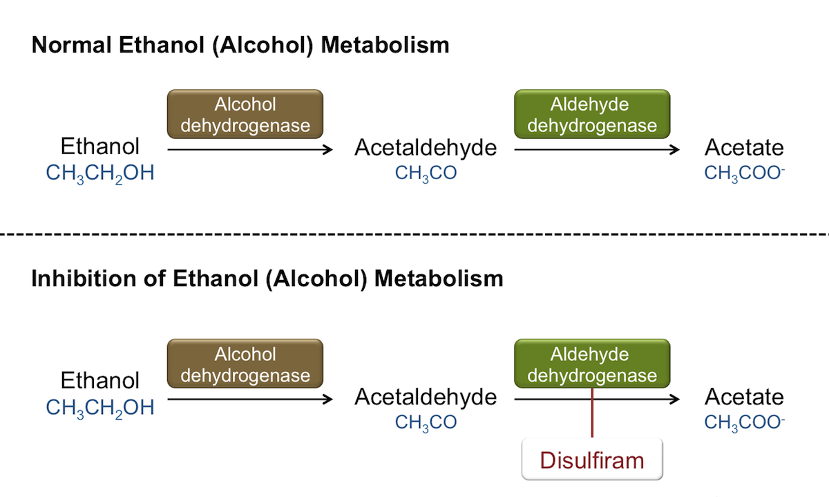 Normal ethanol (alcohol) metabolism is shown in top figure, with conversion of ethanol to acetate.  Disulfiram inhibits the enzyme aldehyde dehydrogenase, leading to accumulation of acetaldehyde, which is associated with adverse effects.<div></div>