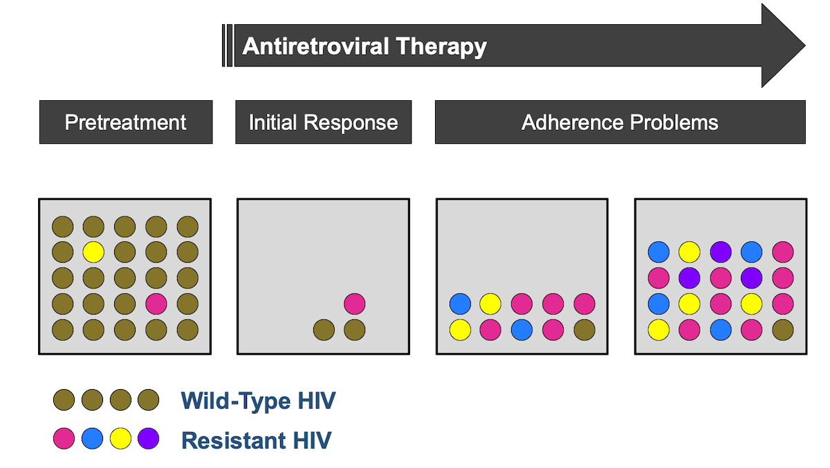This graphic illustrates the basic concept that with suboptimal antiretroviral therapy, as may occur with poor adherence, drug-resistant strains of HIV have a selective advantage and can emerge to become the dominant circulating strains of HIV.<div>Illustration by David Spach, MD</div>