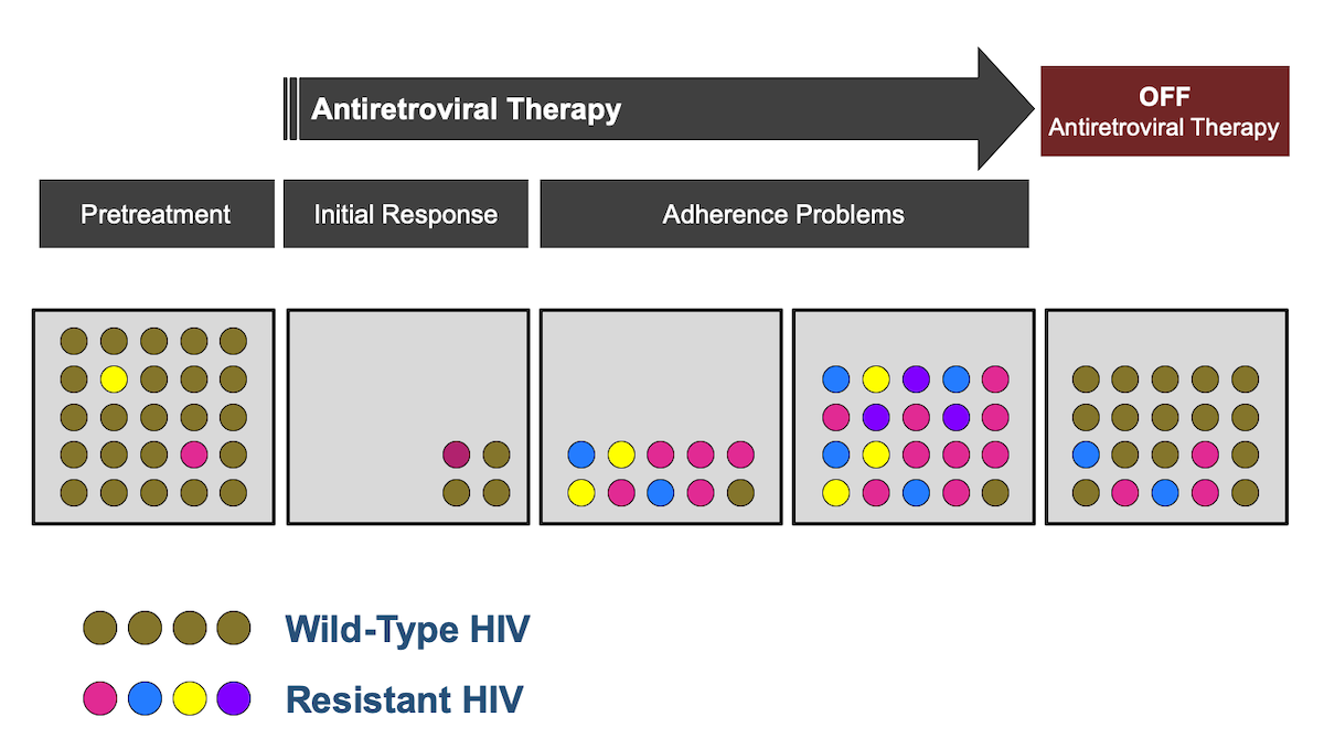 In situations where HIV drug resistance has developed while an individual is taking antiretroviral therapy, the discontinuation of the antiretroviral therapy regimen will remove the selective pressure on HIV and some drug-resistant mutants may back mutate to wild-type HIV. In addition, in this situation, wild-type HIV may have greater fitness than mutated strains and thus growth of wild-type strains may outpace drug-resistant strains. Accordingly, it is optimal to obtain resistance testing while the patient is on antiretroviral therapy or promptly after discontinuation.<div>Illustration by David H. Spach, MD</div>