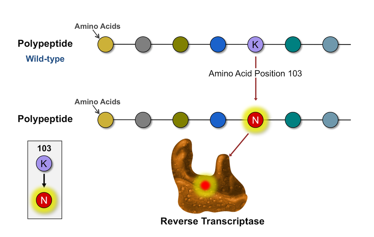 In this example, the amino acid lysine (K) has been replace by asparagine (N) at amino acid position 103 in the reverse transcriptase protein. The amino acid position 103 is located in the outer rim of pocket where NNRTIs bind.<div>Illustration by David H. Spach, MD</div>