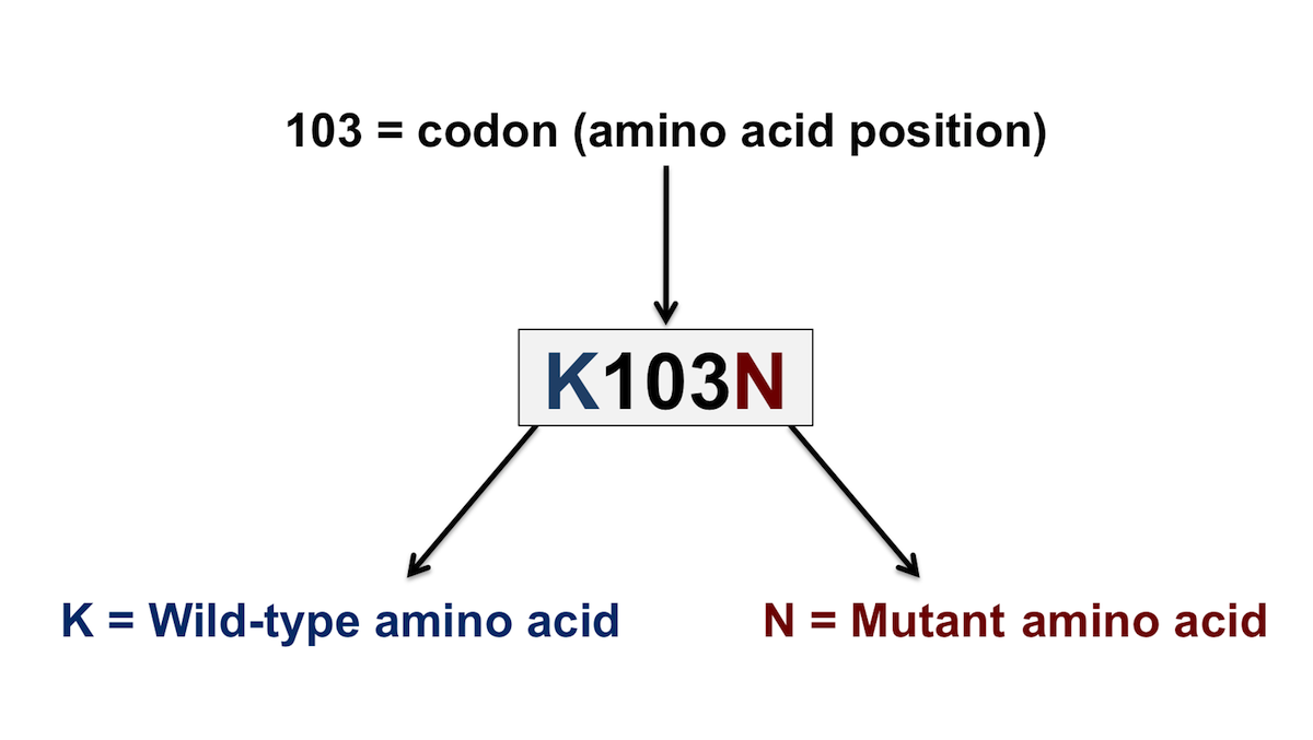 The HIV genotype provides information based on the inferred amino acid substitutions predicted by the HIV DNA sequence and these substitutions are compared with wild-type HIV amino acid sequences. The genotype resistance report lists the wild type amino acid, followed by the position of this amino acid, followed by the amino acid that has replaced the wild type amino acid at the position listed.<div></div>