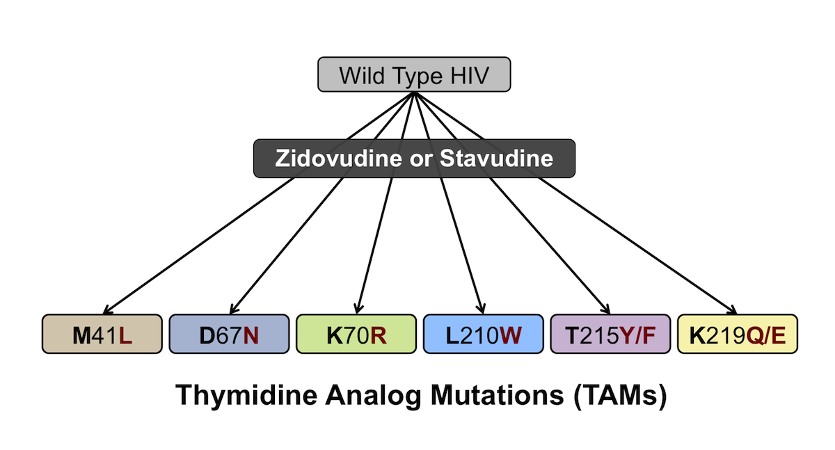 The thymidine analog mutations arise in the setting of inadequate virologic suppression with an antiretroviral therapy regimen that contains either zidovudine or stavudine.<div>Source: Shafer RW, Schapiro JM. HIV-1 drug resistance mutations: an updated framework for the second decade of HAART. AIDS Rev. 2008;10:67-84.</div>