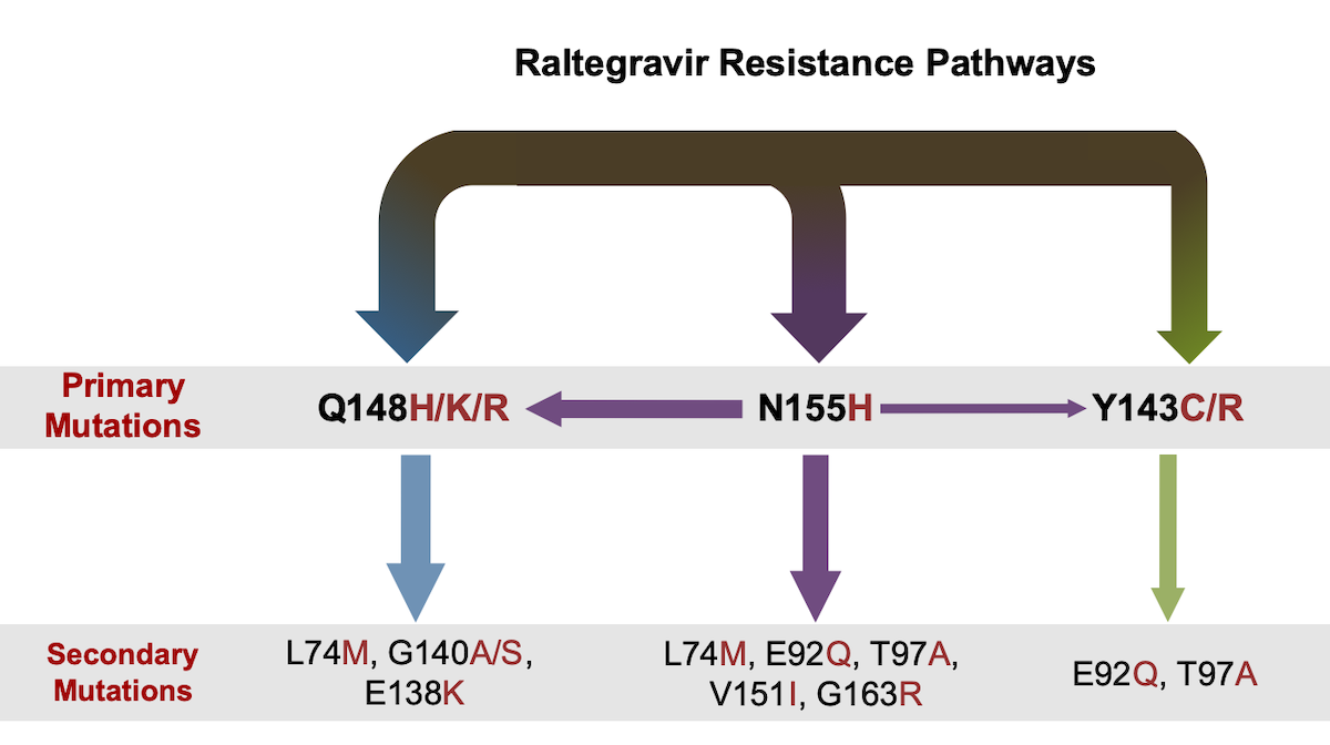 Drug resistance to raltegravir occurs most often in one of three pathways: Q148, N155, and Y143. As shown by the relative sizes of the arrows, the Q148 pathway is the most common pathway and it has the greatest impact on raltegravir-associated resistance. The N155 pathway is the next most common pathway, but because this mutation does not impact raltegravir nearly as much as the Q148, there is frequent cross-over from the N155 pathway to the Q148 pathway.<div>Source: Mbisa JL, Martin SA, Cane PA.  Patterns of resistance development with integrase inhibitors in HIV. Infect Drug Resist. 2011;4:65-76.</div>