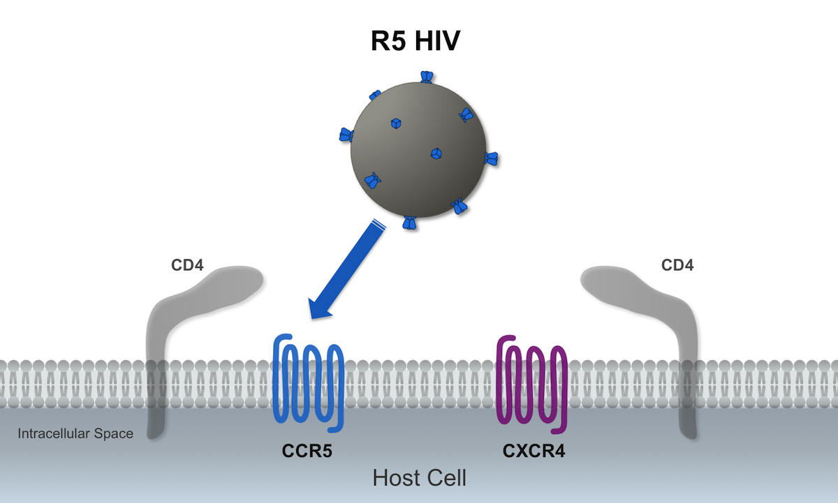 In this illustration, the R5-tropic HIV is represented by the blue envelope spikes; the R5 HIV binds to the host CCR5 coreceptor during the viral cell entry process.<div>Illustration by David Spach, MD</div>