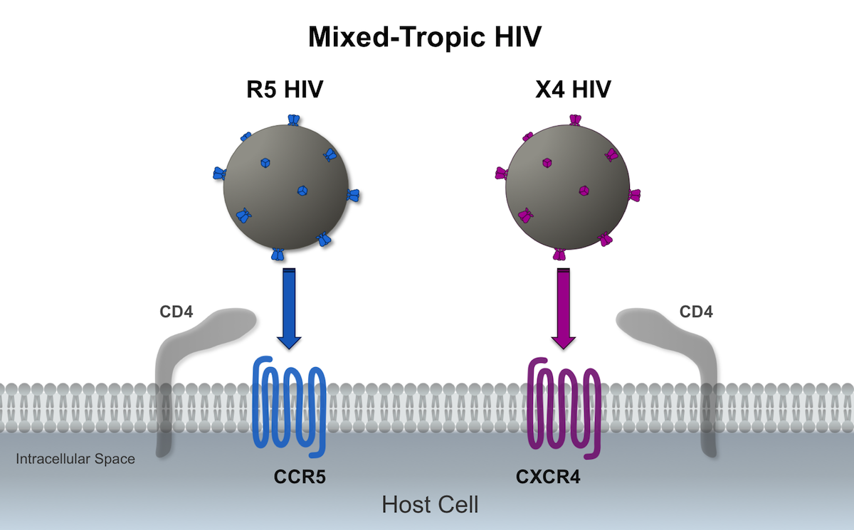 In this illustration, the mixed-tropic HIV is represented by a mixture of R5-tropic HIV (blue envelope spikes) and X4-tropic HIV (purple envelope spikes); the R5 HIV binds to the CCR5 coreceptor and the X4 HIV binds to the CXCR4 coreceptor.<div>Illustration by David Spach, MD</div>