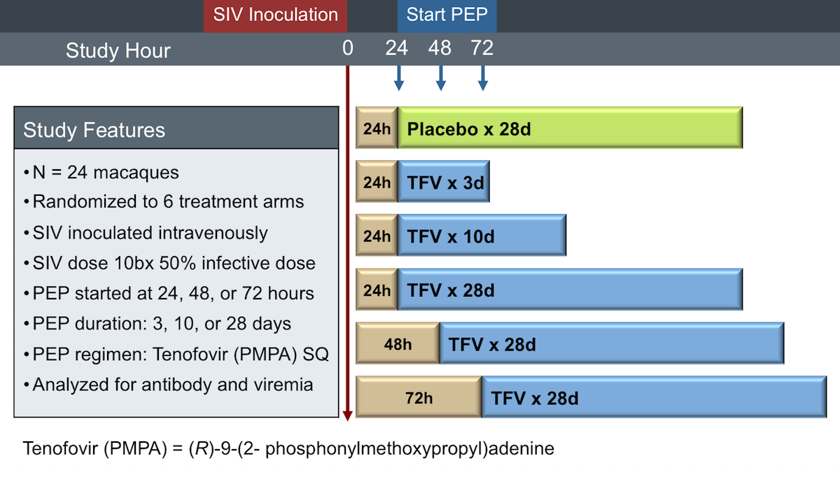 In this study, investigators inoculated 24 macaques with simian immunodeficiency virus (SIV) and then instituted various postexposure prophylaxis regimens with tenofovir, which is (R)-9-(2-phosphonylmethoxypropyl).<div>Source: Tsai CC, Emau P, Follis KE, et al. Effectiveness of postinoculation (R)-9-(2-phosphonylmethoxypropyl) adenine treatment for prevention of persistent simian immunodeficiency virus SIVmne infection depends critically on timing of initiation and duration of treatment. J Virol. 1998;72:4265-73.</div>